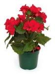 Комнатные горшечные растения и цветы