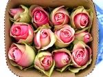Роза Bella (Белла роза)