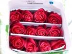 Роза Cherry (Черри О)