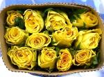Роза High yellow magic (Хай йеллоу мэджик)