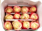 Роза Sweetness (Свитнесс)