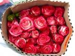 Роза кустовая Cream Twister (Крем Твистер)
