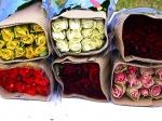 Свежесрезанные розы по 20 штук в упаковке