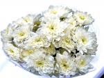 Хризантема кустовая Zembla (Зембла)