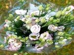 Эустома Белая, с розовым кантиком