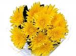 Хризантема игольчатая одноголовая Anastasia Yellow (Анастасия)