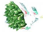 Тюльпан Зелено-белый